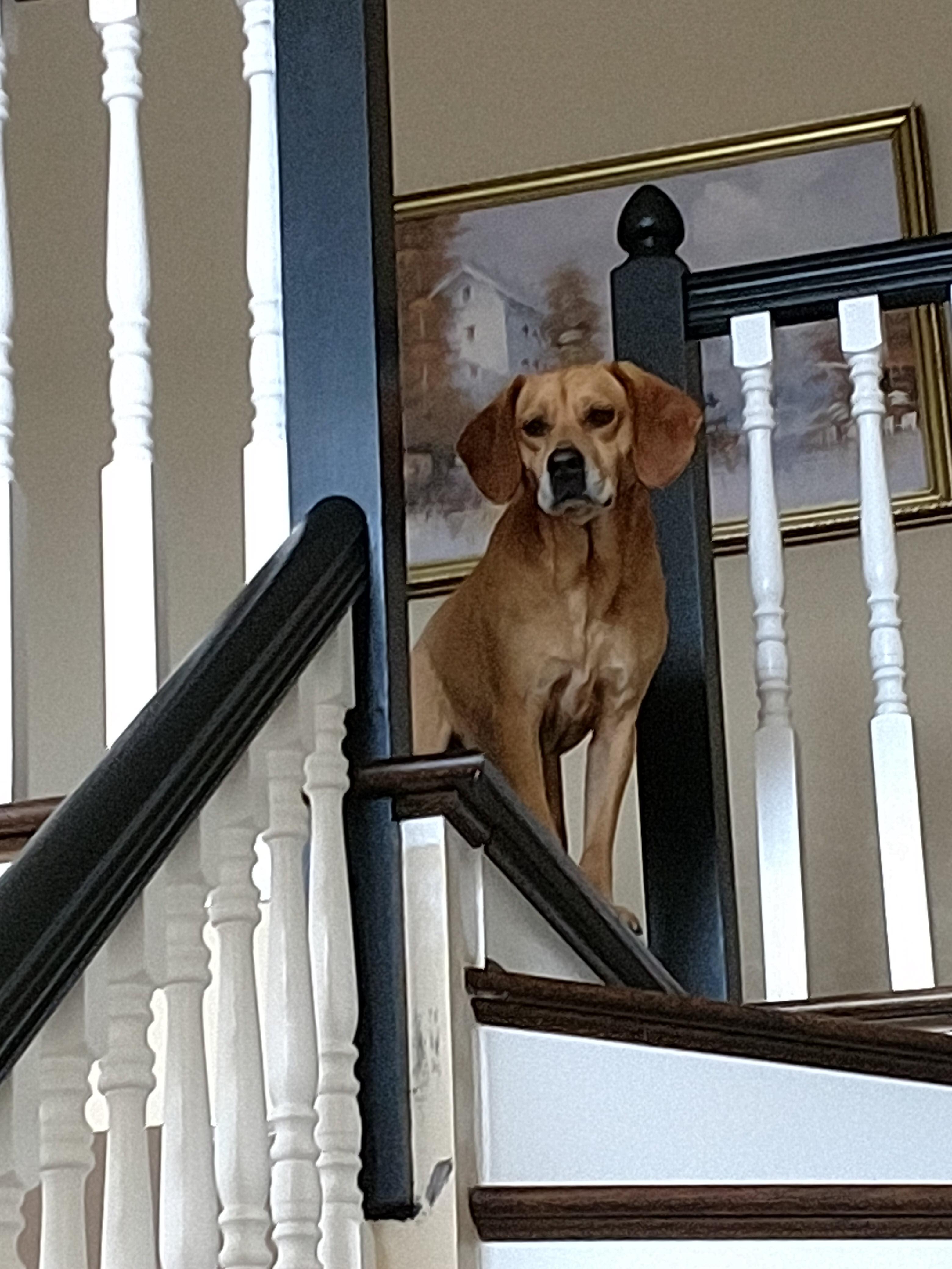 Carmello on Staircase_Bellevue