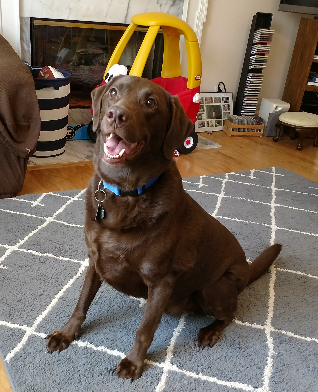 Happy Dog_Bellevue