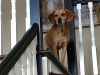 Carmello on Staircase_Bellevue