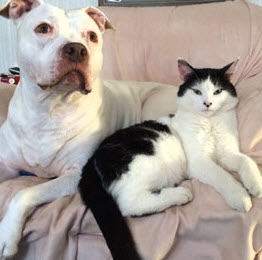 dog and cat sitting on couch