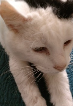 Erins-Cat