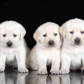 Five sweet puppies